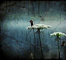 Queen Anne's Blue  Mist  by KFuoco