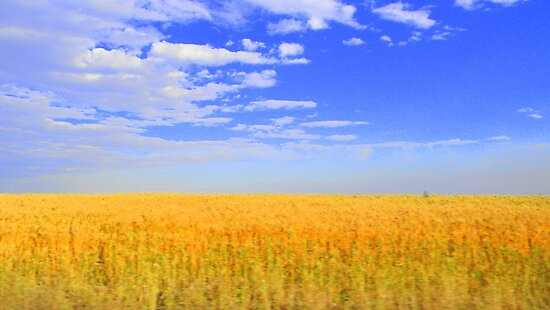 Grains and Sky by Mr. Sherman