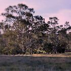 Bank of Eucalypts by Lozzar Landscape