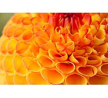 Harvest Time is Dahlia Time Photographic Print