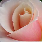 Garden Pleasures - Dainty Pastel Pink Rose by Mariaan Maritz Krog Photos & Digital Art