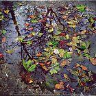 Autumn All Year Round by Mojca Savicki