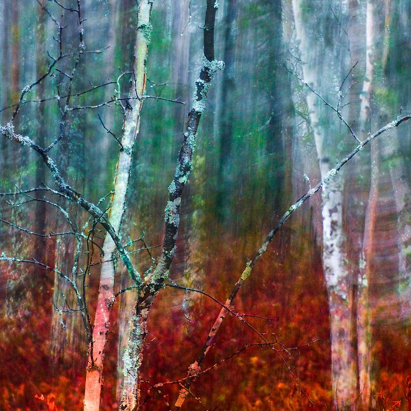 Marsh by natans