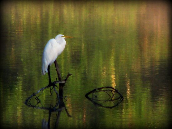 Early Morning Egret by DottieDees