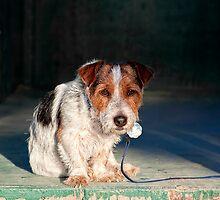 Scruffy Little Dog by Ann J. Sagel