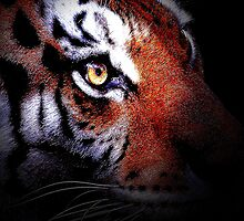 Eye of the Tiger by animals