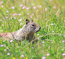 Groundhog in the Meadow by animals