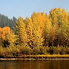 Autumn Colors Along the Nechko River by frame-by-frame