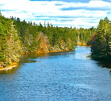 Salmon River by David Davies