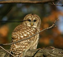 Owl by Carol Bock