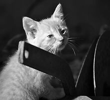 Cute Kitten by Roger Jewell