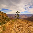 &quot;The Grand Canyon&quot; by JohnDSmith