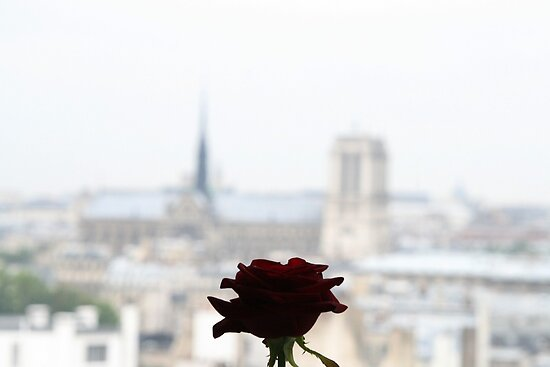 The rose of Paris by DKphotoart