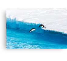 Adelie Penguin  Leap of Faith Canvas Print