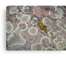 Lichens on Montana Granite Canvas Print
