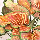 Caladium by Anne Sainz
