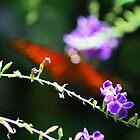 Butterfly Shadows  by CarolinehbFL