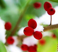 Snow Berrys by Tim Bell