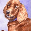 Irish Red Setter by Anne Sainz