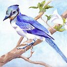 Blue Jay by Anne Sainz