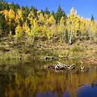 Autumnal Aspens, Rosemont Reservoir, CO 2010 by J.D. Grubb