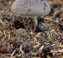 Forest Mushroom by monkeypolice