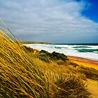 Rugged Beauty, Anzac Beach, Phillip Island by Danka Dear
