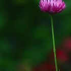 paper daisy by gary roberts
