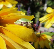 I LOVE FROGS!  by: Barberelli Photography  by Barberelli