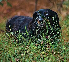 My Dog Coty in the Grass by imagetj
