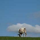 Normand cow by solena432