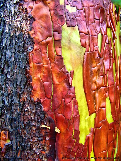 Nature's Abstract by rocamiadesign