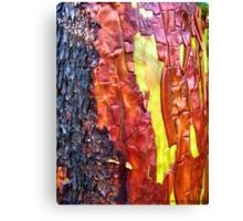 Nature's Abstract Canvas Print