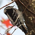 woodpecker by andthen