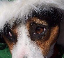 Mojo's New Holiday Coat - Digital Photography by Claudia Goodell