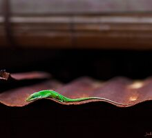 Anole On A Hot Tin Roof by Jack Grace