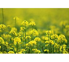 Yellow Smell Photographic Print