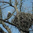 Eagle&#x27;s nest by eaglewatcher4