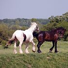 Horses by Barry Goble