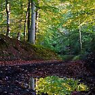 Forest lane puddle by photontrappist