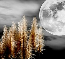 Pampas Grass in the Moonlight by imagetj