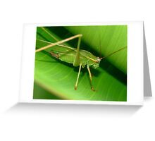 Grass Hopper Greeting Card