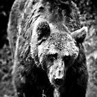 Bear Essentials by Aj Finan