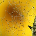 Autumn morning web by Pauline-W