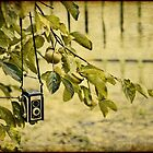 Vintage Cameras Don't Grow on Trees by Michelle  Morris