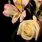 Flower Blossoms by Sheryl Kasper