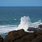 Crashing Wave and Seagull by Robin  Koster