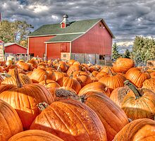Pumpkin Season by ECH52