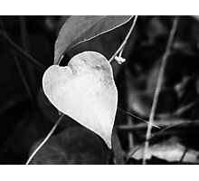 heart shaped leaf Photographic Print