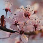 Pink Bokeh by salsbells69